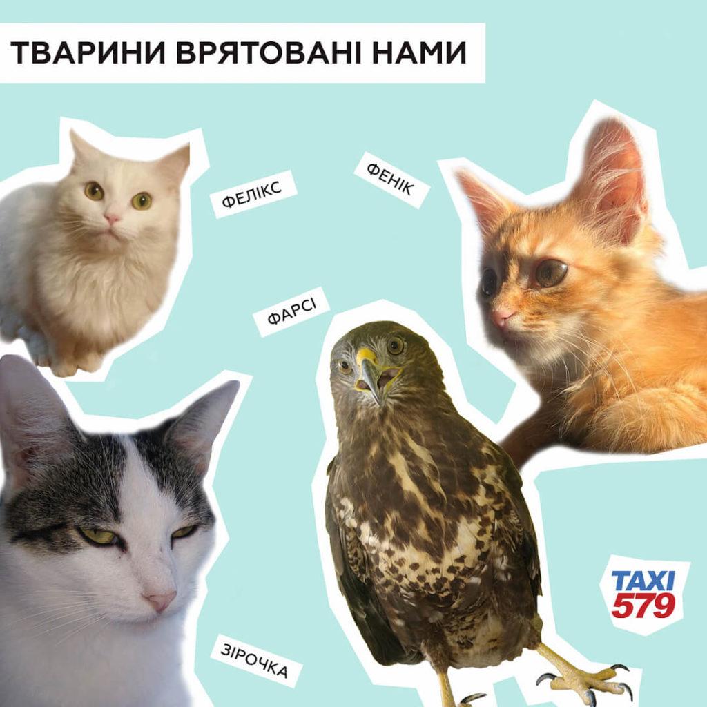 «Флешмоб помощи бездомным животным» запустили в Оптимальном такси 579!